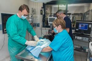 mise-en-place-de-la-chirurgie-anesthesie-un-travail-d-equipe